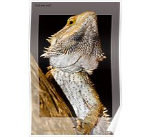 Reptile breaking out Poster