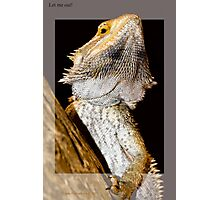 Reptile breaking out Photographic Print