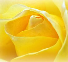 Lemon Petals by naturelover