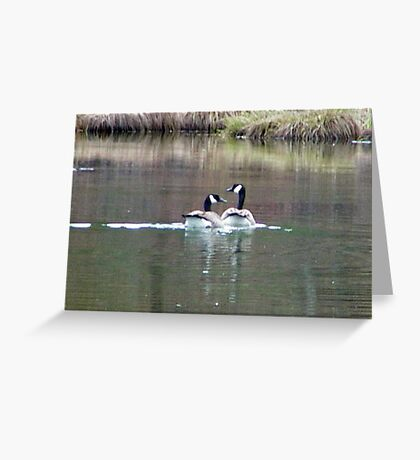 Quick Honker Daddy, paddle Faster, Buddy is watching us Greeting Card