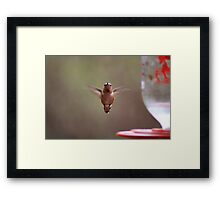 Here's lookin' at ya Framed Print