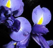 Tre Iris by LunaRose