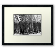 Whispers in the woods Framed Print