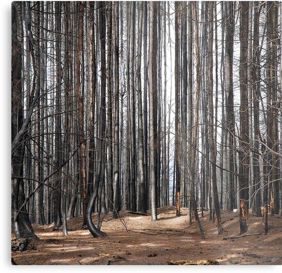 Aftermath by Paul Vanzella