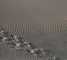 dunes by karen peacock