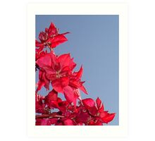 Pink Red Blooming Bougainvilleas Against A Blue Sky Art Print
