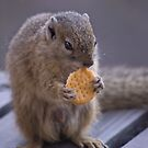 A BISCUIT A DAY...? by Magriet Meintjes