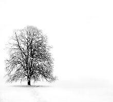Silenzio by PhotoDream Art