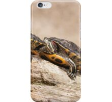 Turtles in a row iPhone Case/Skin
