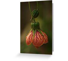 lanterns#3 Greeting Card