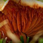Fallen Mushroom by myraj