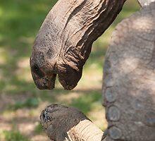 turtles by spetenfia