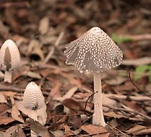 Wild Mushrooms, Blackbutt Reserve, NSW, Australia by Martyn Baker | Martyn Baker Photography