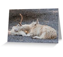 goat markhor Greeting Card