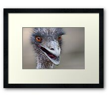 ostrich in the farm Framed Print