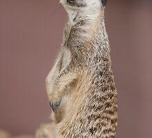 lemur by spetenfia
