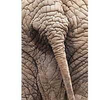the elephant tail in the jungle Photographic Print