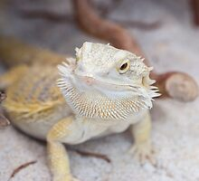 iguana in the jungla by spetenfia