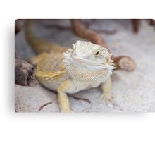 iguana in the jungla Canvas Print