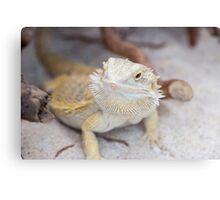 iguana in the jungla Canvas Print