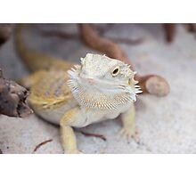 iguana in the jungla Photographic Print