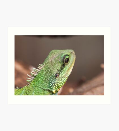 green lizard Art Print