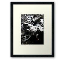Rough tree seas Framed Print
