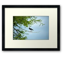 Walking the tightrope Framed Print
