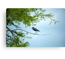 Walking the tightrope Canvas Print