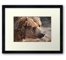 bear in the forest Framed Print