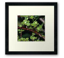 Jade Framed Print