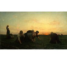 The Weeders 1868 by Jules Breton Photographic Print
