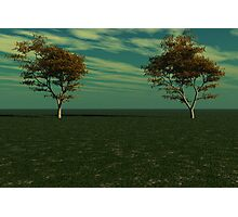Maple Trees Photographic Print
