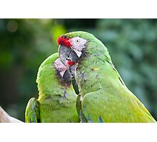 ara macaw parrot on its perch Photographic Print