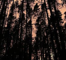Woods by pixies000