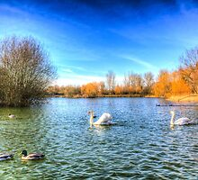 The Peaceful Swan Lake by DavidHornchurch