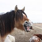 Horse Comedy by Claudia Dingle
