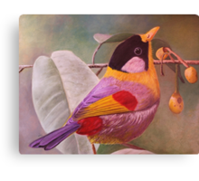 Silver eared Mesia Canvas Print