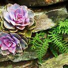 Lost Gardens of Heligan by Mark Wilson