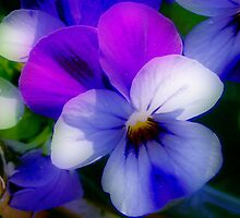Violet  Colors by ienemien
