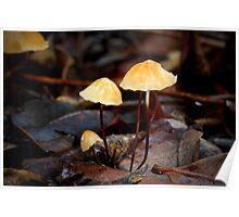 Fungi Season 9 Poster