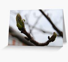 Walnut buds Greeting Card