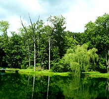 Green Reflections by Tracy Engle