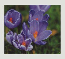 Purple Spring Crocuses T-Shirt