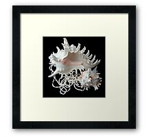Mother and Child reunion... Framed Print