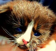 Wee Lost Kitten by Lisa Taylor