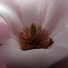 Magnolia  by Laura60