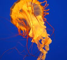 Jelly by Jesse J. McClear