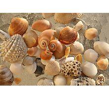 Seashells Photographic Print