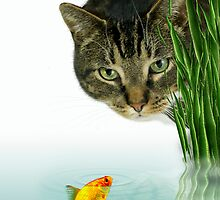 Swim Little Fishie....swim by Katseyes